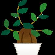 【パルダリウム】あまり背が高くならなくて低光量でもいける観葉植物ない?