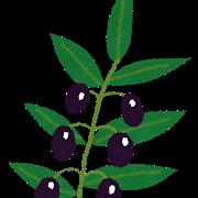 オリーブってゾウムシすごいのに新築のシンボルツリーに選ぶ人多過ぎ