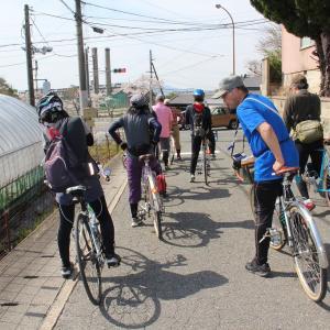 ゆるゆるサイクリング部のお花見乱 天理市