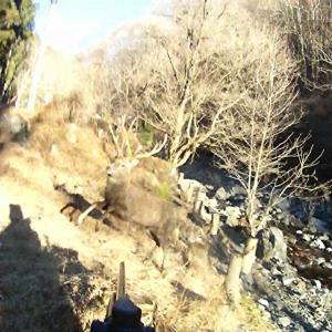 至近距離で鹿を撃つ!