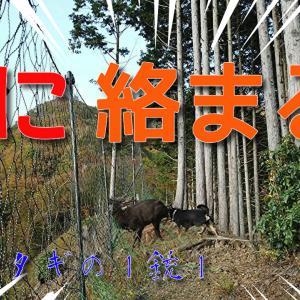 網に絡まった角鹿