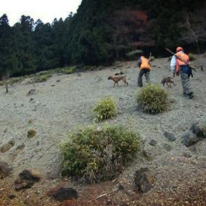 プロットハウンドで野生の鹿と猪を狩る