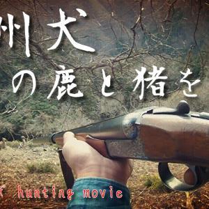 紀州犬で鹿を狩る!