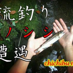 渓流釣り ウリボウに出逢う。