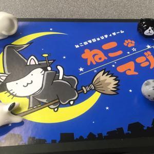 【2019ゲムマ秋新作】「ねこマジョ」1つで4つのゲームが遊べる!マジョリティゲーム詰め合わせ!