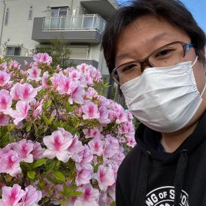 お墓参りで花に癒されました。