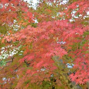 笠間稲荷は紅葉もキレイでした。