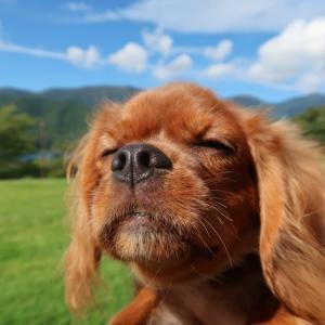 犬連れ旅行in河口湖①