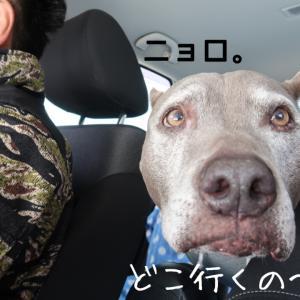 犬連れ海鮮丼