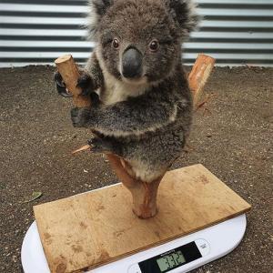 動物はこうやって体重測定してるそうです