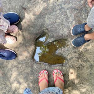 タイで恐竜の足跡が見れる場所