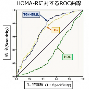 インスリン抵抗性を考えてみました[11完] HOMAよりも役に立つ指標