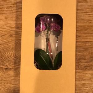【1377】サカタのタネ優待到着。マイクロ胡蝶蘭!と、春に株分けした観葉植物。