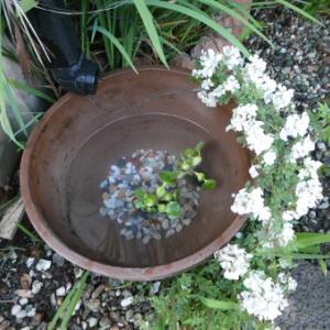 お墓参り・買い物・水鉢・寄せ植え