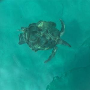 レダン島❷お魚とウミガメ