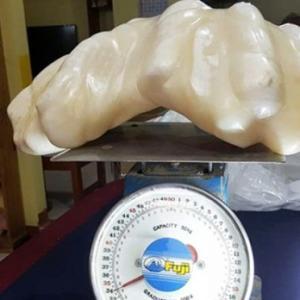 【フィリピン】漁師が発見した天然の巨大真珠、縁起物としてとっておいたら10年後に108億円の価値判明(写真あり)