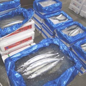 サンマ大不漁 前年の1割にも届かず 値段も高い