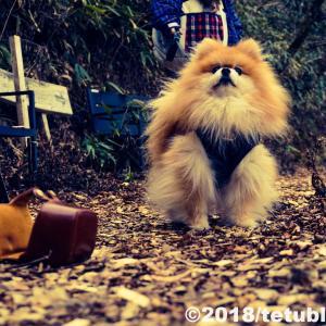 愛犬の前十字靭帯損傷と向き合うブログ!2ヶ月経過した現在の様子と室内の対策について
