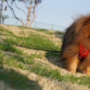 犬が台風で体調不良を引き起こす原因はこれ!天気による低気圧が犬の身体に与える影響とは?