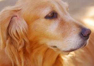 1989年4月25日の今日は、 国際盲導犬の日