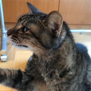【腎不全ステージ4】猫も認知症になるんですね。【診断から6ヵ月】