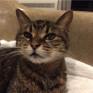腎不全の猫に治療法開発!猫の寿命が2倍に!?