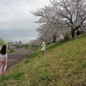 控え目にお花見散歩