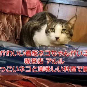 ネコがいる喫茶店「アルル」人懐こいネコちゃん達と美味しい料理で最高の癒し空間。
