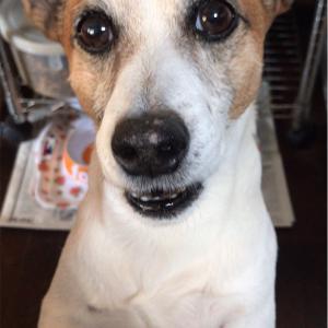 私の愛犬、ジャックの紹介