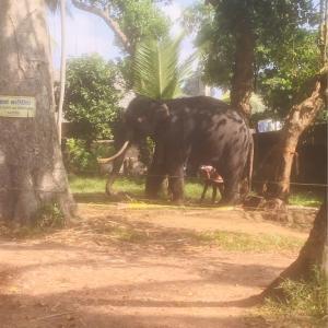 スリランカに祈りを捧げます〜Pray for Sri Lanka〜
