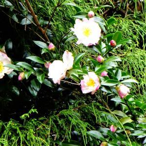 秋のお花^^