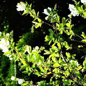 お花咲き乱れてます^^