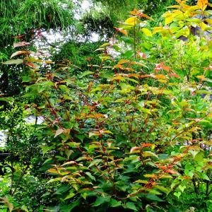 梅雨の晴れ間のお庭