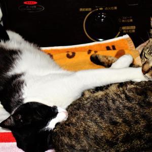 猫の寝姿に笑えます^^