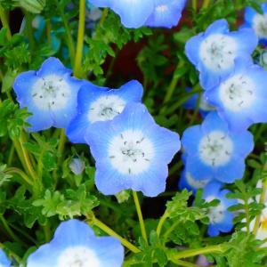 今日のお花(^^♪
