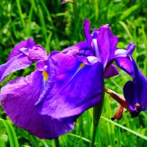 6月のお花(^^♪