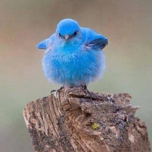 幸せの青い鳥・・・・お問い合わせについて
