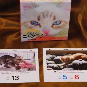 【カレンダー】日めくりニャンコ! 2020カレンダーに 『おすし♂』掲載決定!! #日めくりニャンコ