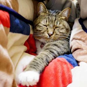 『おすし♂』成長記録 58ヶ月目のまとめ #ネコ #キジトラ #靴下猫