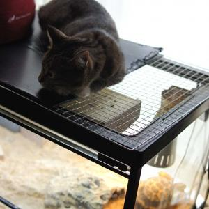 『おすし♂』蔵出し大放出 Part5 【ネコ】【キジトラ】【靴下猫】