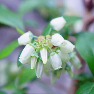 春の庭花撮影会【PETRI】【2020ガーデン日記(4)】