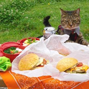 ちょこっとドライブ de ピクニック with おすし【猫とお出掛け】
