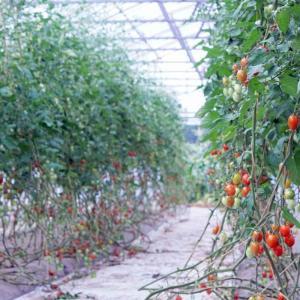 本州最北の避暑地へ2019 Part4【農作業編】【PETRI】