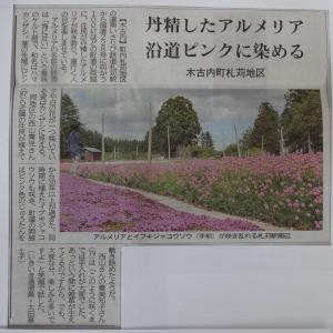 木古内町・札苅のお花ロード