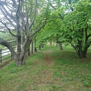 鈴蘭公園&緑ヶ丘公園