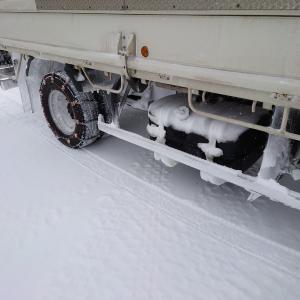 雪が降って喜ぶのはBuddyだけ!