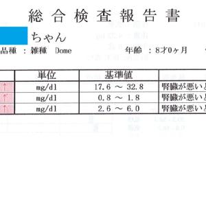 2019年 1月15日 病気発覚から約2か月