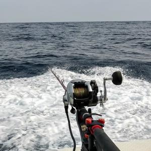 鹿島沖ヤリイカ(4)