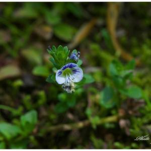 町内に咲く山野草の花!