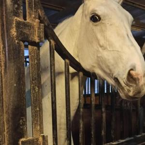 台湾で馬と触れ合おう☆馬場で乗馬体験できる「高雄市馬術協會」